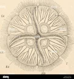 elementary text book of zoology zoology alimextary canal 55 vascular canals  [ 1285 x 1390 Pixel ]
