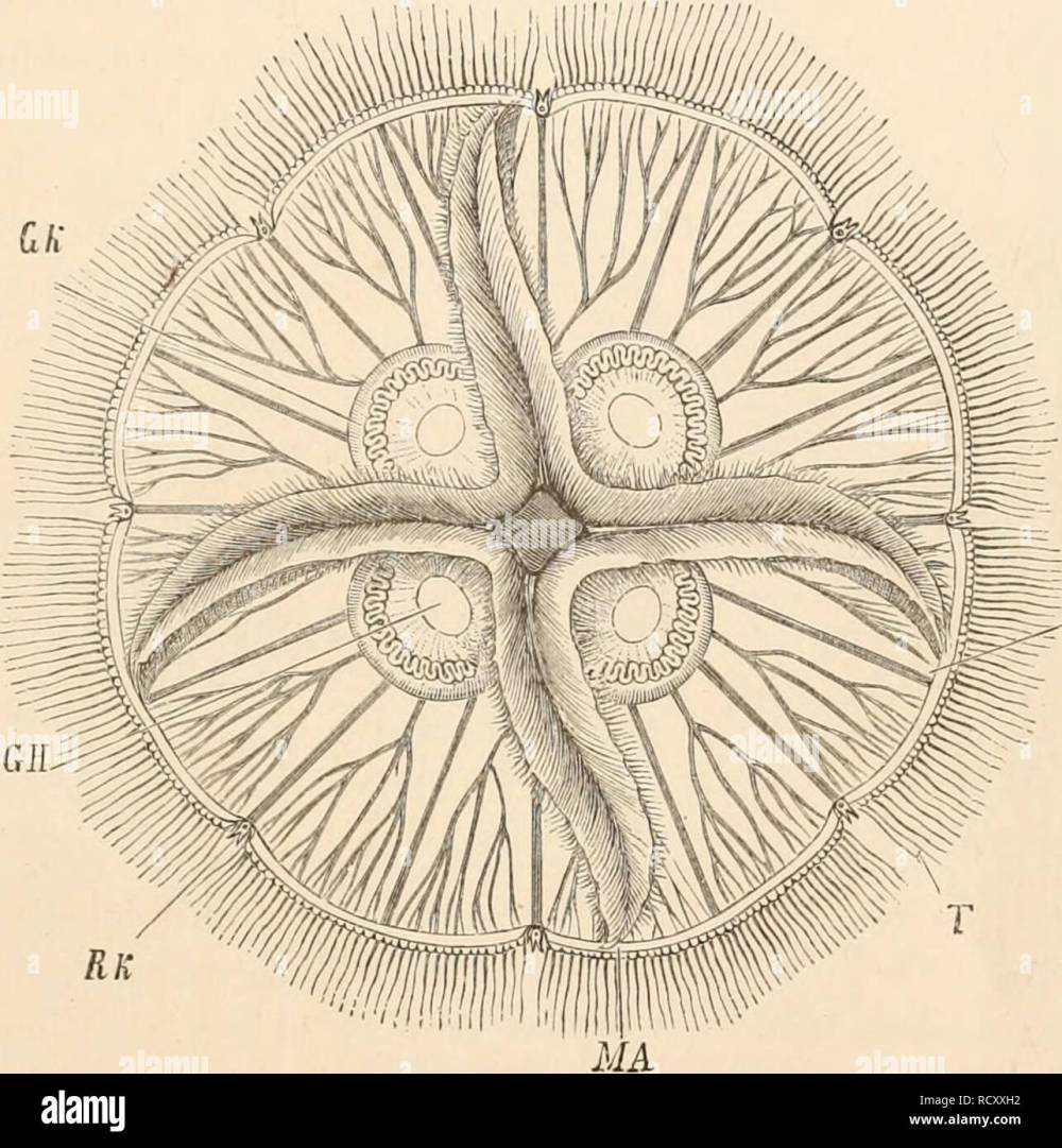 medium resolution of elementary text book of zoology zoology alimextary canal 55 vascular canals