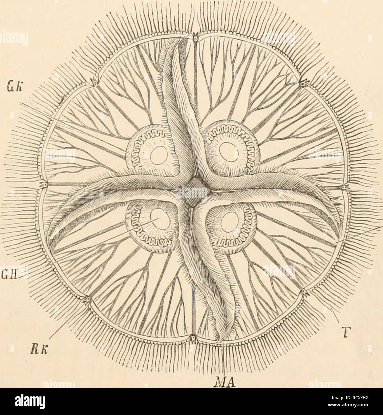 hight resolution of elementary text book of zoology zoology alimextary canal 55 vascular canals