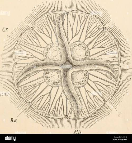 small resolution of elementary text book of zoology zoology alimextary canal 55 vascular canals