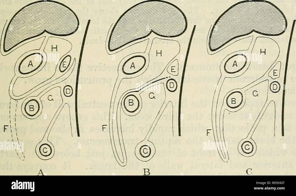 medium resolution of the mesentery rectum mesentery of descending colon fig 974