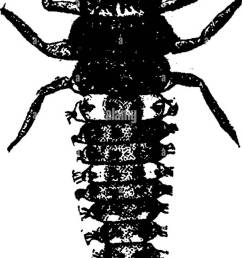 insects injurious to fruits illustrated with four hundred and forty wood cuts  [ 846 x 1390 Pixel ]