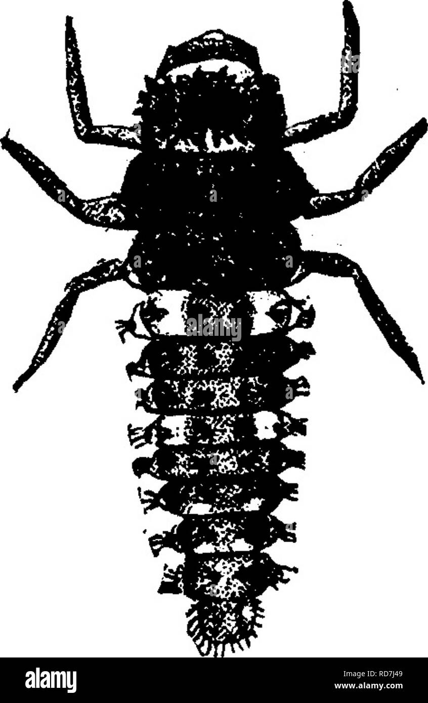 hight resolution of insects injurious to fruits illustrated with four hundred and forty wood cuts
