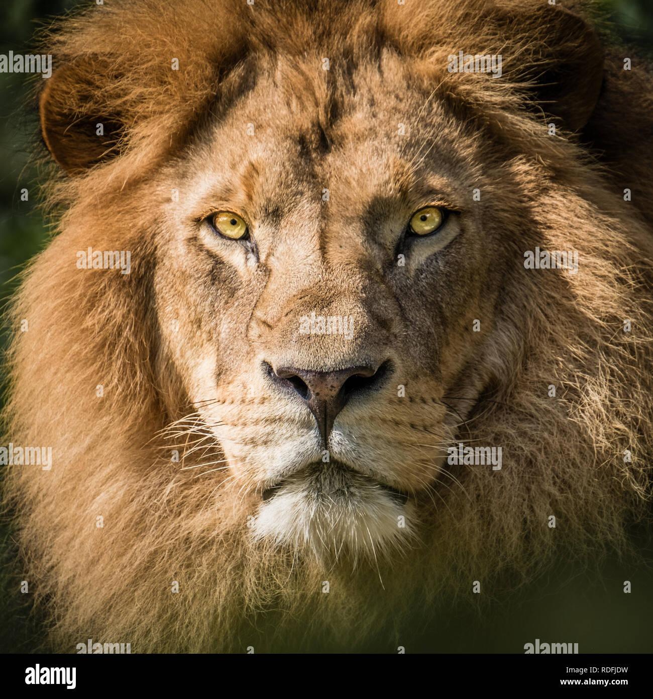 fierce portrait of a