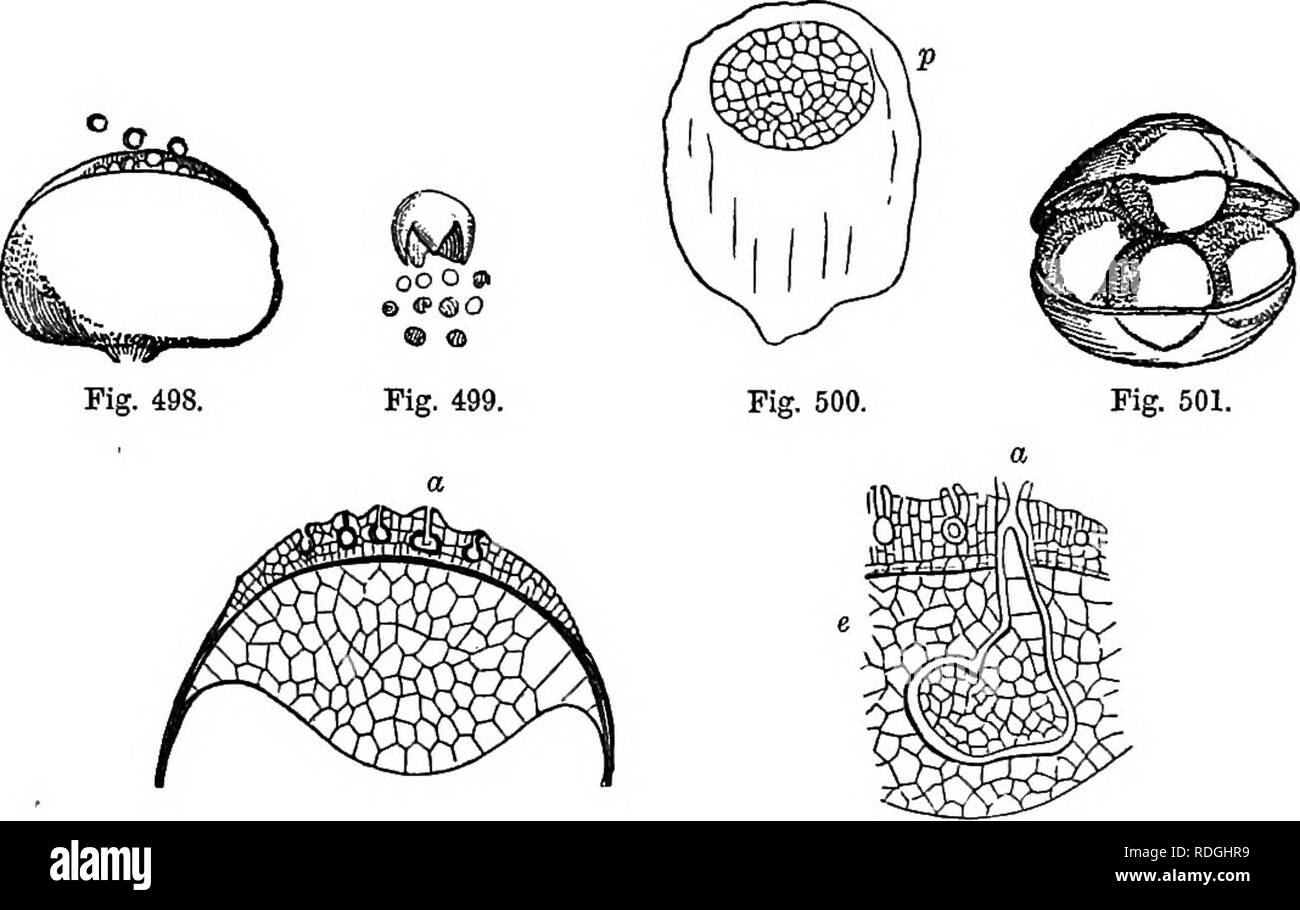 hight resolution of  a manual of botany being an introduction to the study of the structure physiology and classification of plants botany