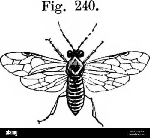 small resolution of the book of the garden gardening the gooseberry 579 ocean queen