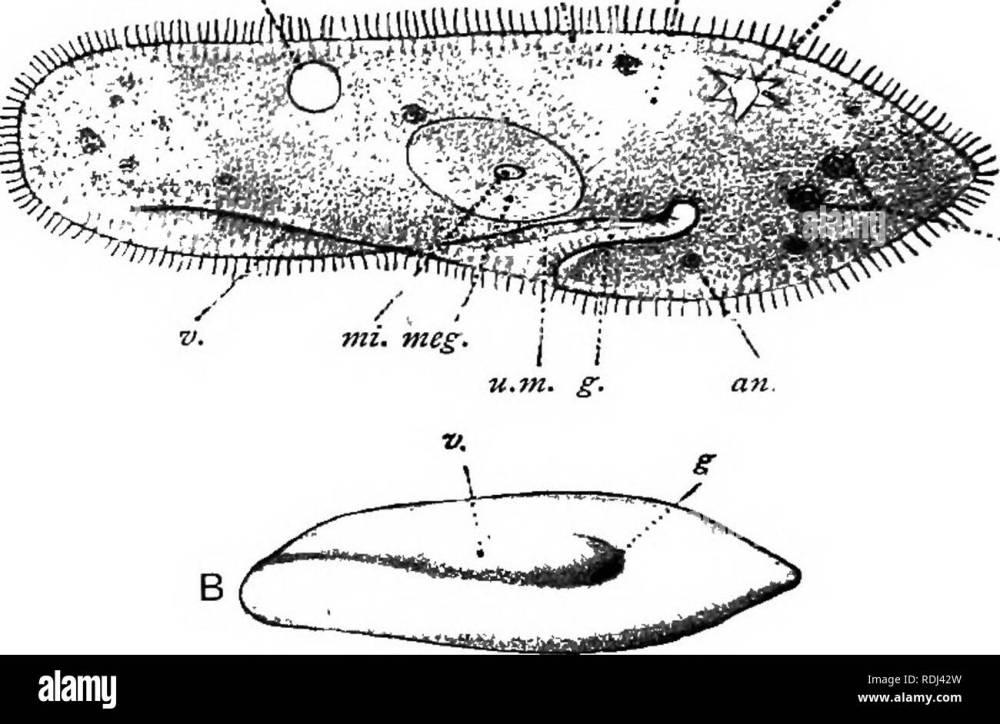 medium resolution of a manual of elementary zoology zoology 13 manual of elementary zoology wards