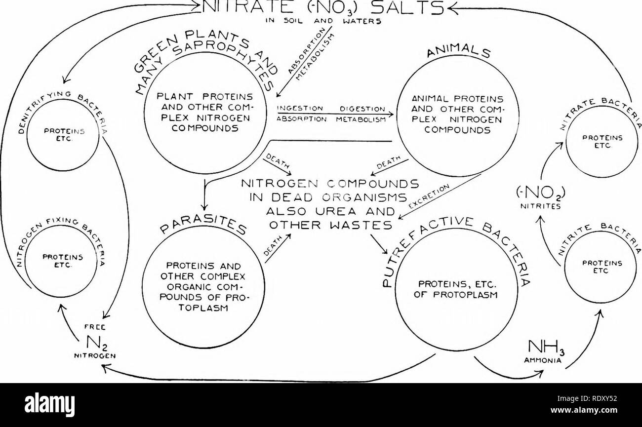 hight resolution of principles of modern biology biology fig 10 9 the cyclic