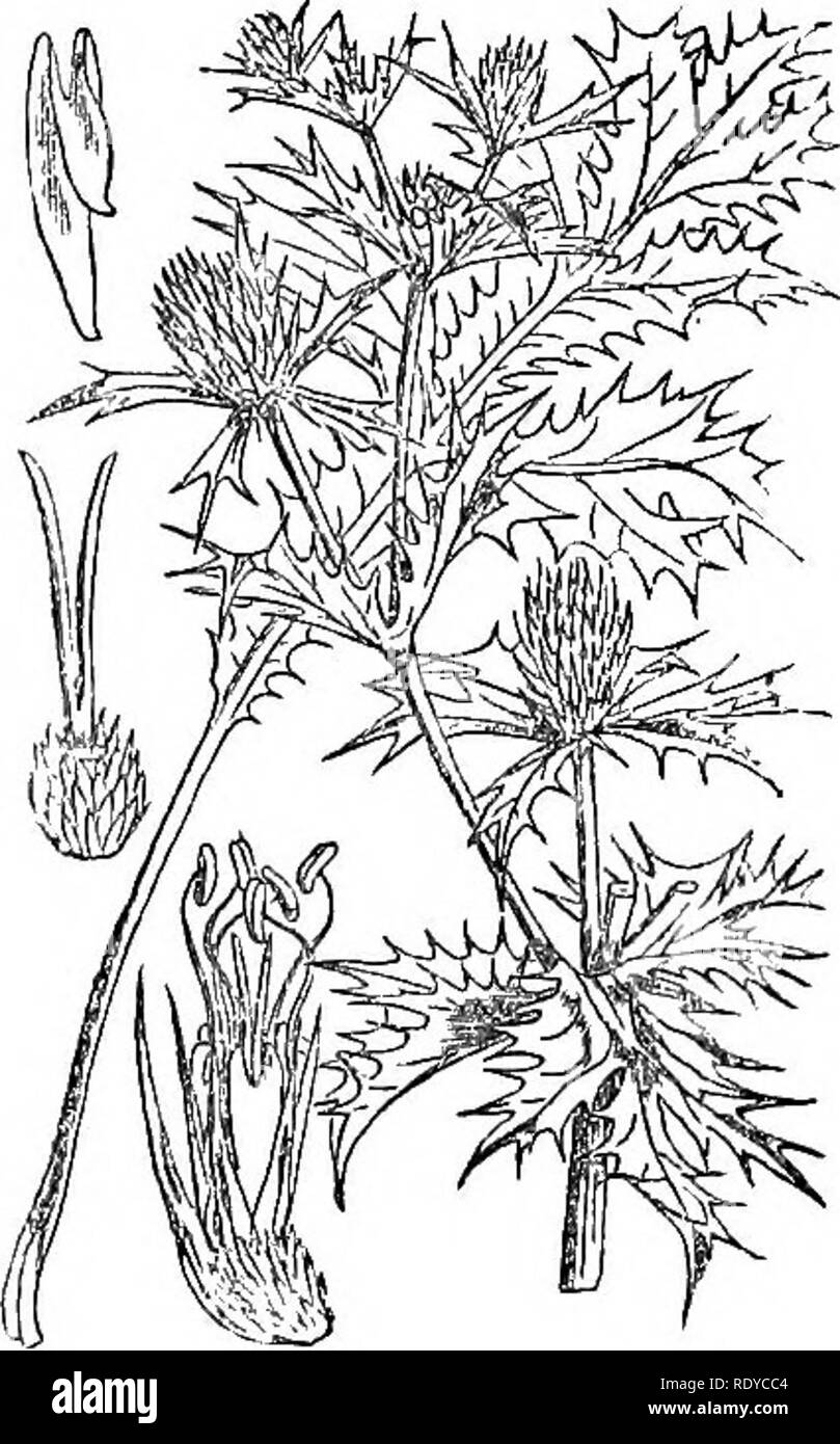hight resolution of illustrations of the british flora a series of wood engravings with dissections