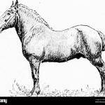 The Breeds Of Live Stock By Live Stock Breeders Livestock The Draft Breeds Of Horses 19 Northeastern France And Resembles Very Much In Type And Characteristics The Belgian Draft Horse It