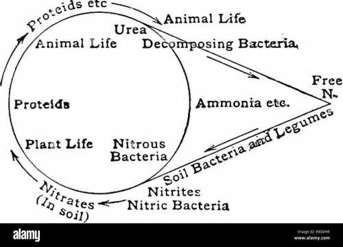 small resolution of essentials of biology presented in problems biology energy from sun i