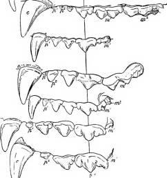 text book of zoology zoology 514 vert ehrata lor  [ 1025 x 1390 Pixel ]