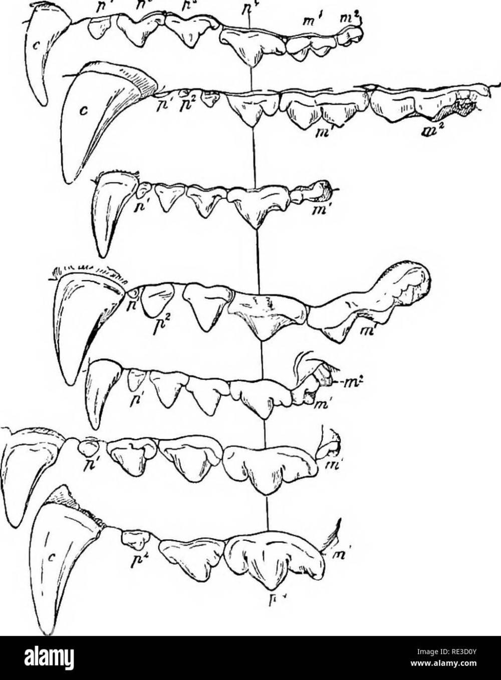 medium resolution of text book of zoology zoology 514 vert ehrata lor