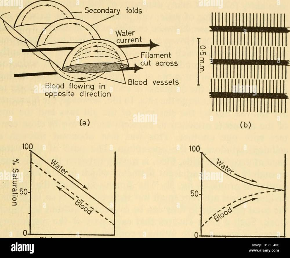 medium resolution of comparative physiology of vertebrate respiration vertebratesaquatic respiration of fishes secondary folds 15 co i50 0 distance