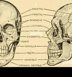 fetal skull diagram blank [ 1300 x 698 Pixel ]