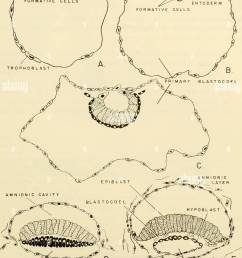 comparative embryology of the vertebrates with 2057 drawings and photos grouped as 380 illus vertebrates embryology comparative embryology  [ 1012 x 1390 Pixel ]
