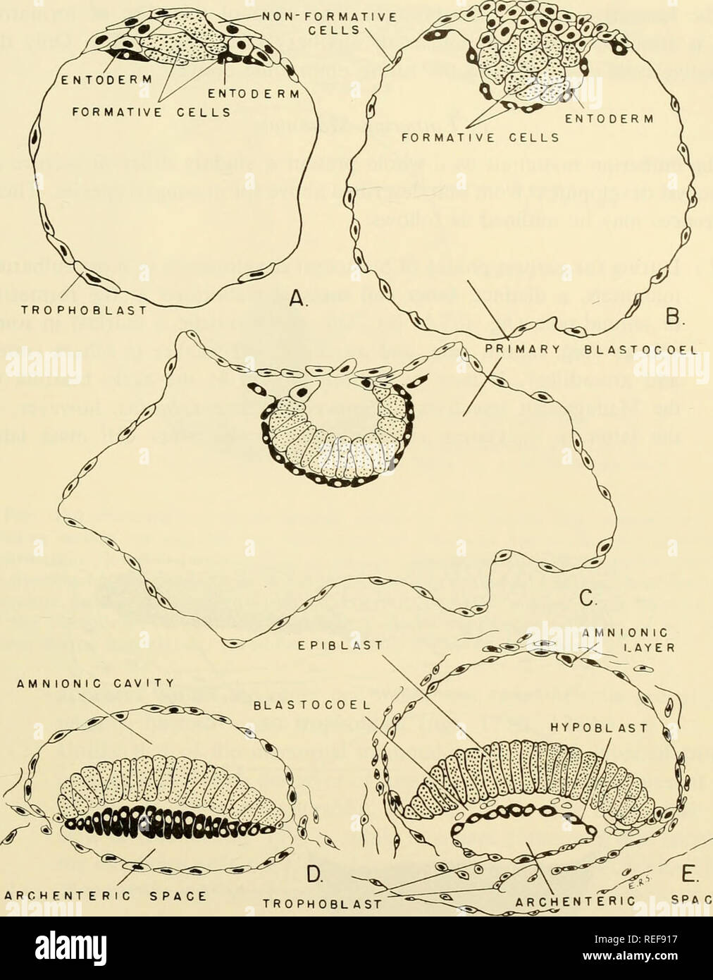 hight resolution of  comparative embryology of the vertebrates with 2057 drawings and photos grouped as 380 illus vertebrates embryology comparative embryology