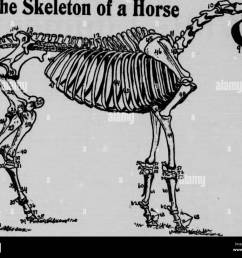 the vet book or animal doctor microform horses b tail chevaux veterinary medicine livestock m decine v t rinaire it yomhor looks as thin  [ 1300 x 1070 Pixel ]