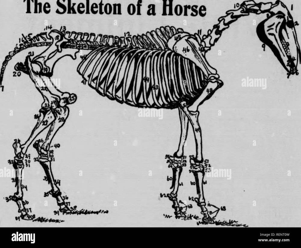 medium resolution of  the vet book or animal doctor microform horses b tail chevaux veterinary medicine livestock m decine v t rinaire it yomhor looks as thin