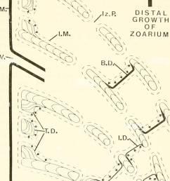 bulletins of american paleontology cerioporid cyclostomes bryozoa nye 29 o  [ 1008 x 1390 Pixel ]