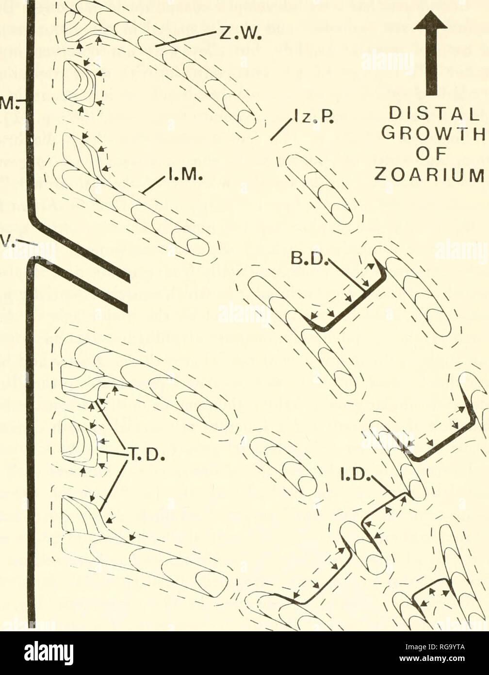 hight resolution of bulletins of american paleontology cerioporid cyclostomes bryozoa nye 29 o