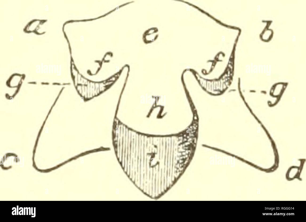 hight resolution of zoology 46 terrestrial air breathing mollusks one half of two transverse rows of teeth of sten hirsutum row or indeed
