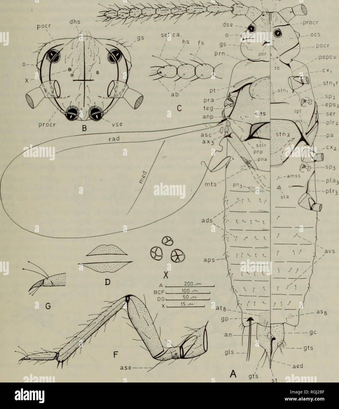 hight resolution of apex occipital diagram wiring diagrams schemabulletin of the british museum natural history entom supp
