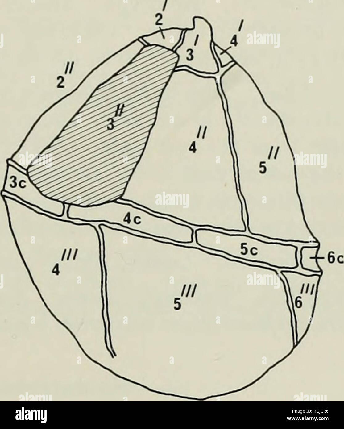 hight resolution of  bulletin of the british museum natural history geology a b fig 14 gonyaulacysta tenuitabulata gerlach de coninck