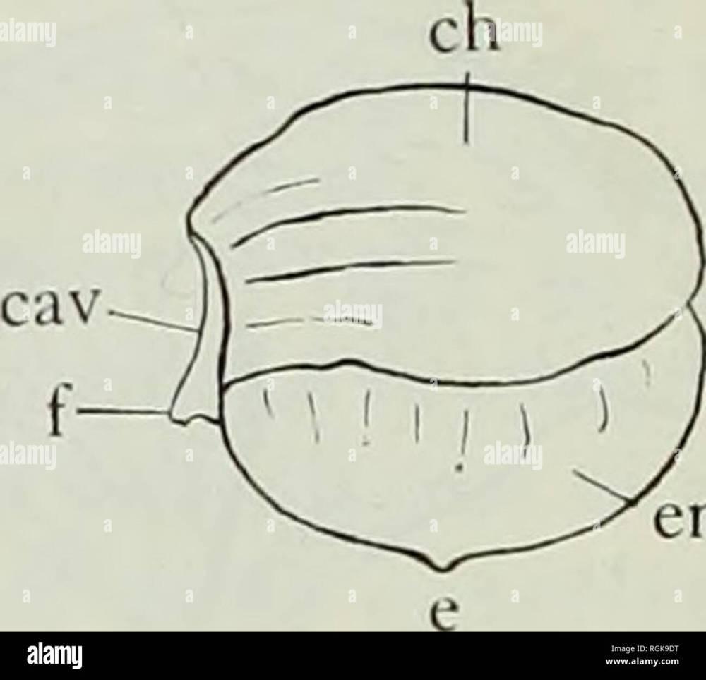 medium resolution of bivalve cast diagram electrical engineering wiring diagram bivalve cast diagram