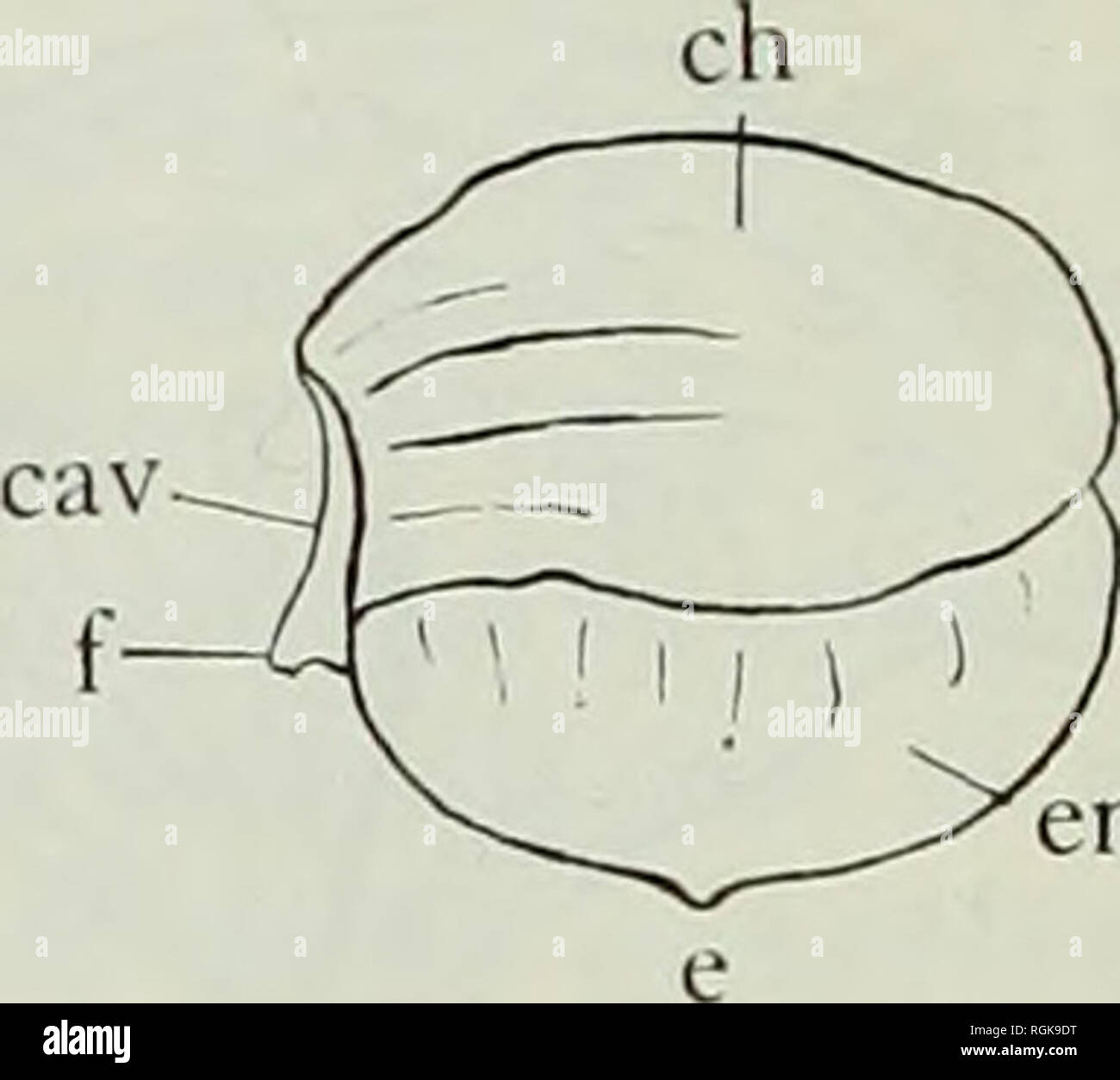 hight resolution of bivalve cast diagram electrical engineering wiring diagram bivalve cast diagram