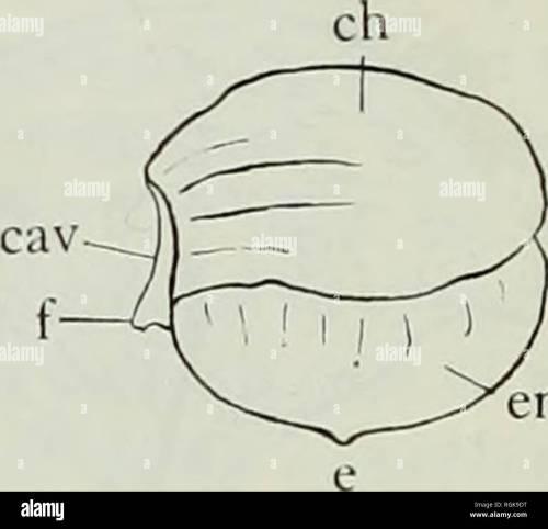 small resolution of bivalve cast diagram electrical engineering wiring diagram bivalve cast diagram
