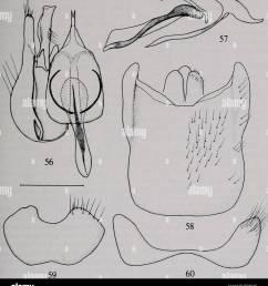 bulletin natural history natural history nov 1980 irwin amp  [ 1198 x 1390 Pixel ]