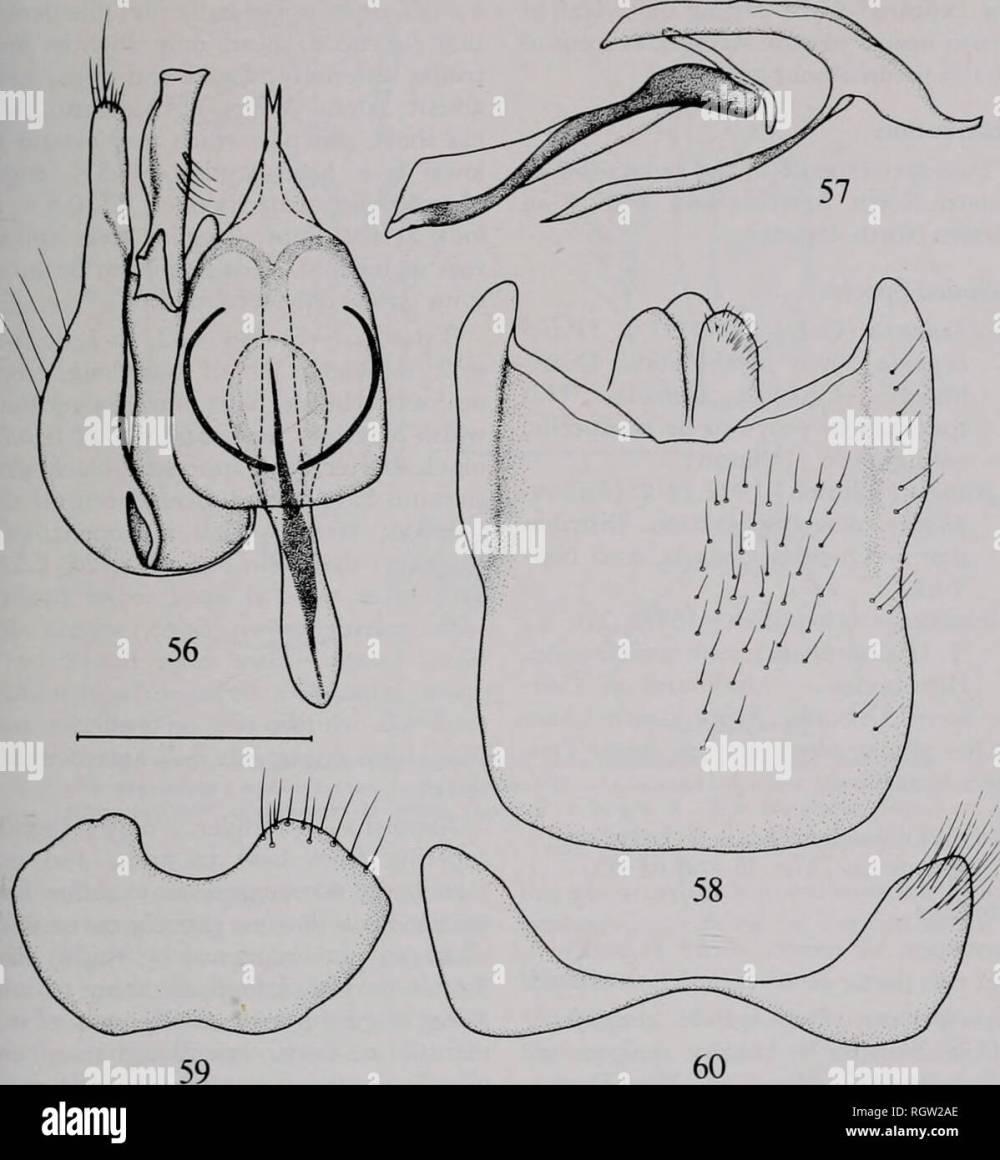 medium resolution of bulletin natural history natural history nov 1980 irwin amp