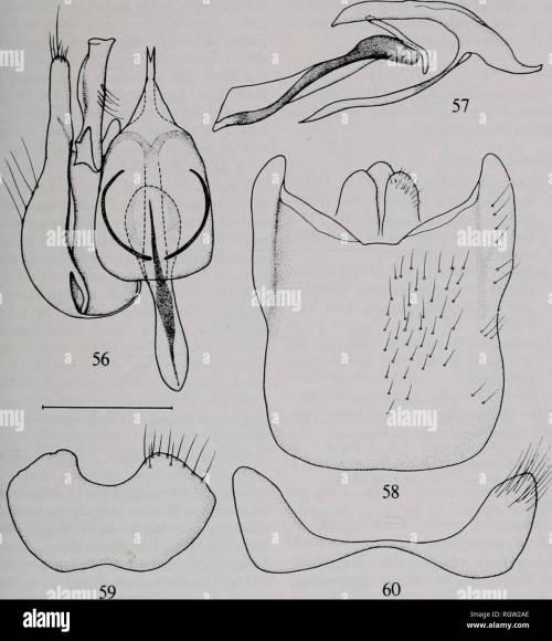 small resolution of bulletin natural history natural history nov 1980 irwin amp