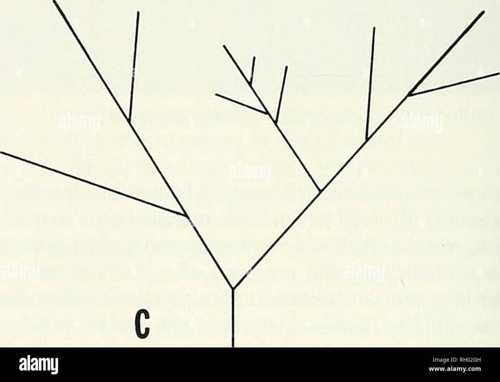 medium resolution of diagram of branching patterns of selected field grown specimens see text for explanation measure up to 50 u m in diameter a non fertile margin always
