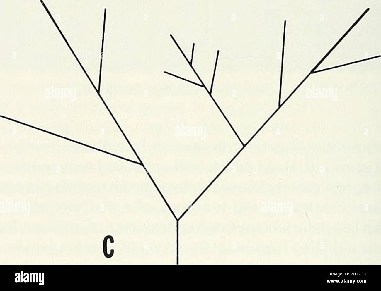 hight resolution of diagram of branching patterns of selected field grown specimens see text for explanation measure up to 50 u m in diameter a non fertile margin always