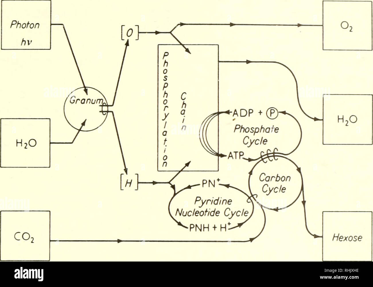 diagram with inputs and outputs of photosynthesis process what is the use er stock photos 20 3 367 then adp available