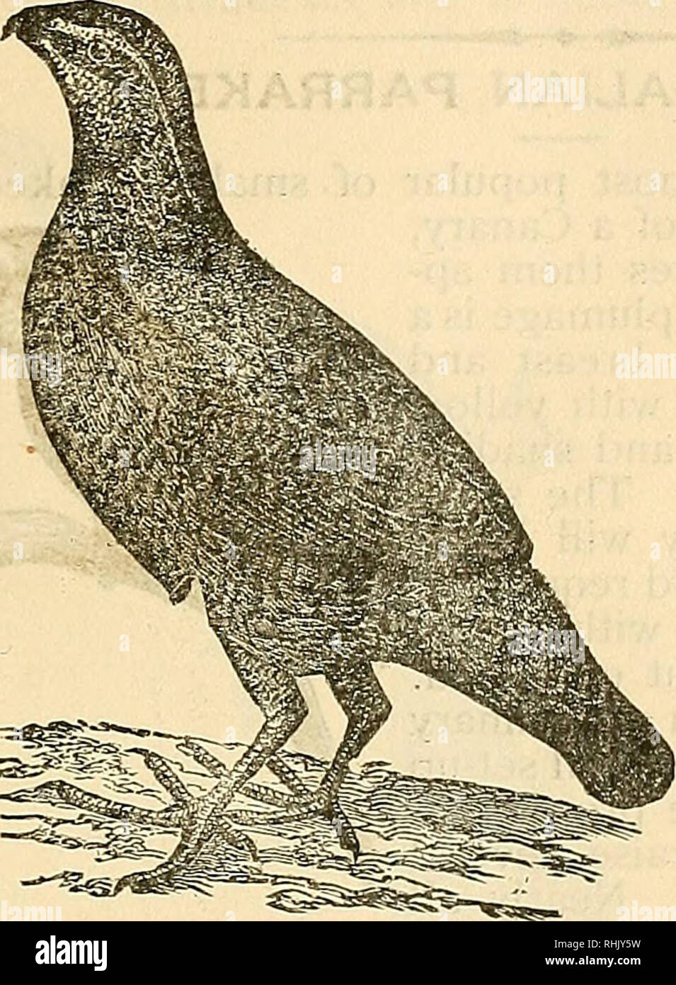 hight resolution of the bird food company s book of cage birds cage birds 91 the