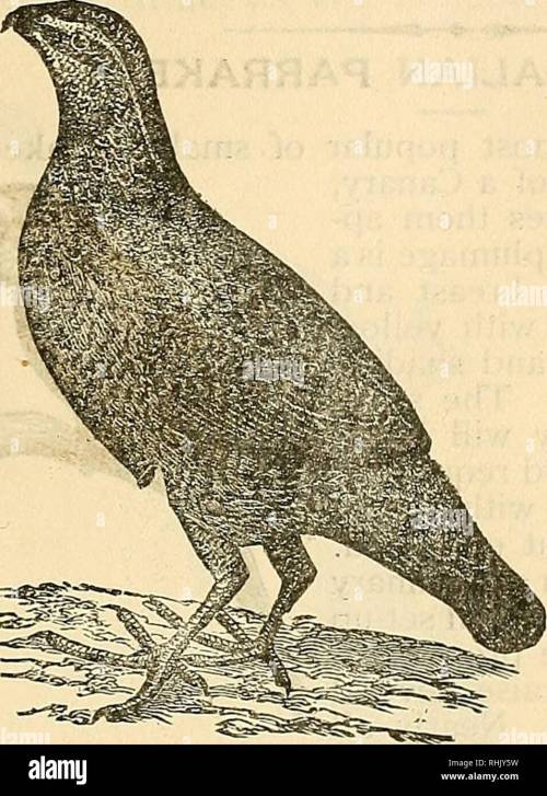 small resolution of the bird food company s book of cage birds cage birds 91 the