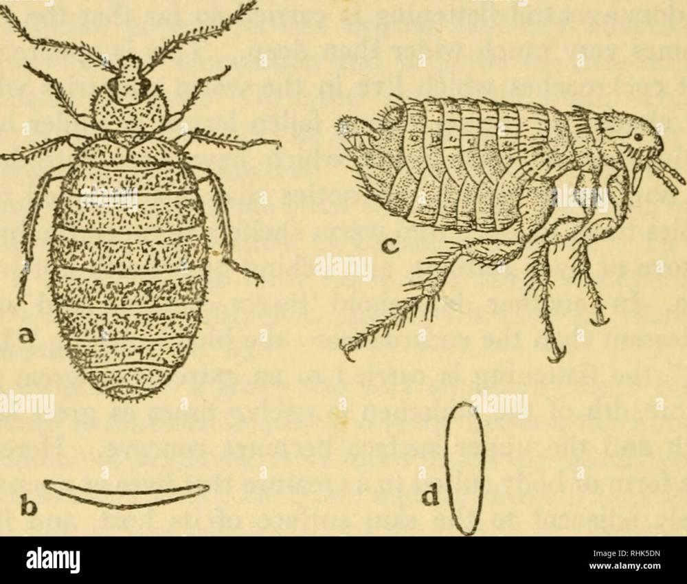 medium resolution of the biology of insects insects biology 270 the biology of insects