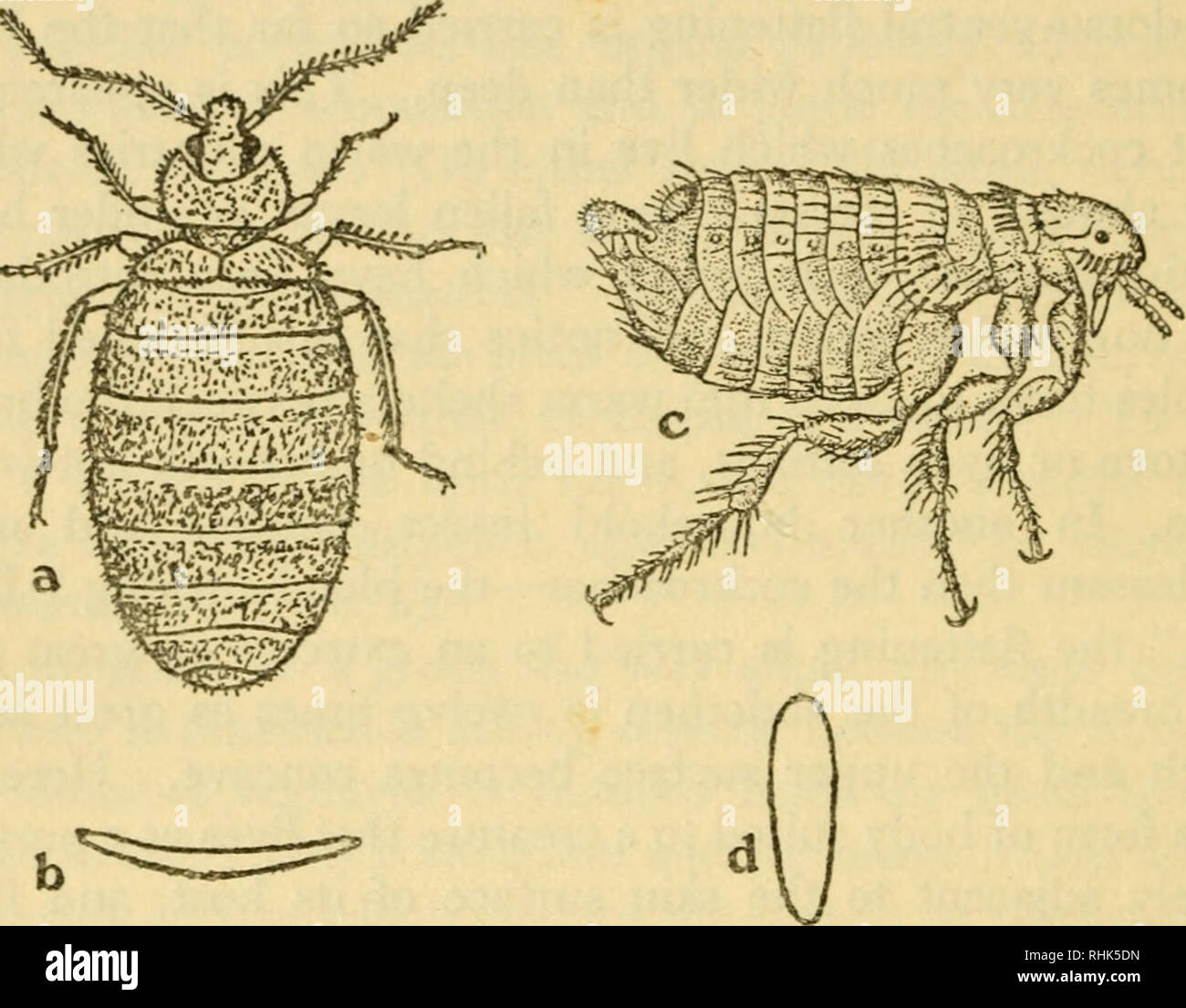 hight resolution of the biology of insects insects biology 270 the biology of insects