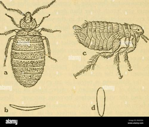 small resolution of the biology of insects insects biology 270 the biology of insects