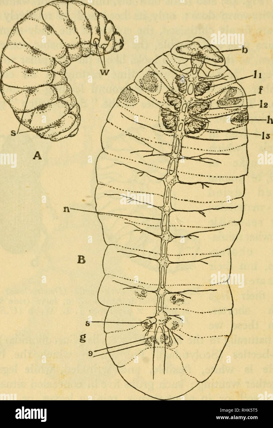 hight resolution of insects biology i8o the biology of insects among the two winged flies diptera all the larvae are destitute of true legs and in the house fly and