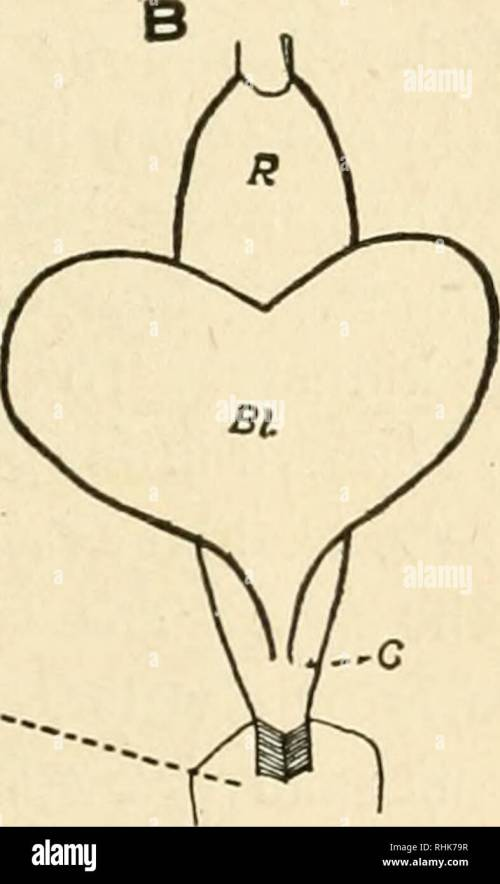small resolution of diagram of the bladder and rectum of