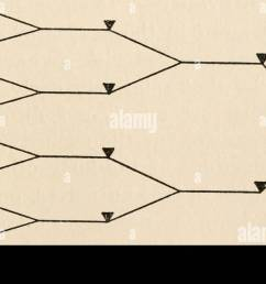 the biology of death being a series of lectures delivered at the lowell institute in boston in december 1920 death biology death b fig 11 diagram  [ 1300 x 652 Pixel ]
