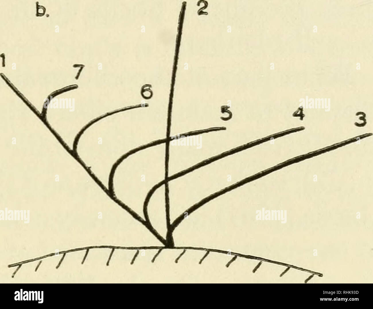 hight resolution of  the biology of cilia and flagella cilia and ciliary motion flagella microbiology fig 40 diagrams showing the sequence of movements of cilia of a