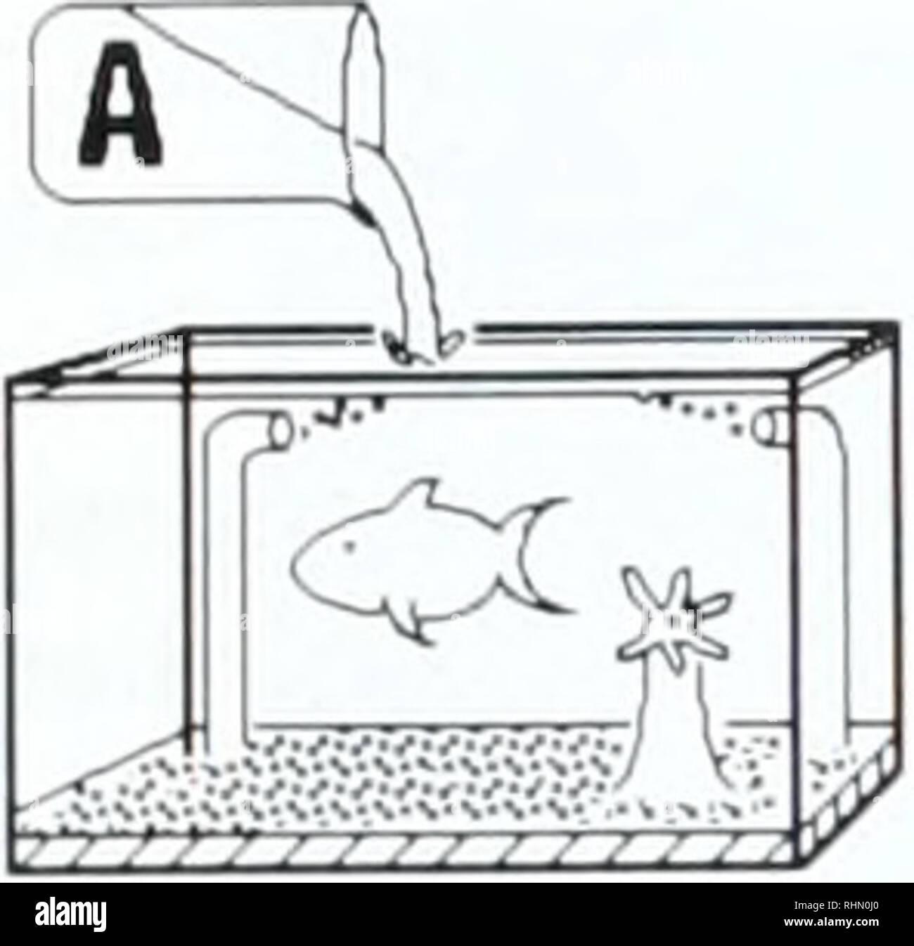 hight resolution of  the biological bulletin biology zoology biology marine biology inland culture of a nudibranch 245 b vacuum mfsa l i d i aftu juvenile larval