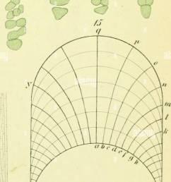 beitr ge zur wissenschaftlichen botanik growth plants plant physiology  [ 858 x 1390 Pixel ]