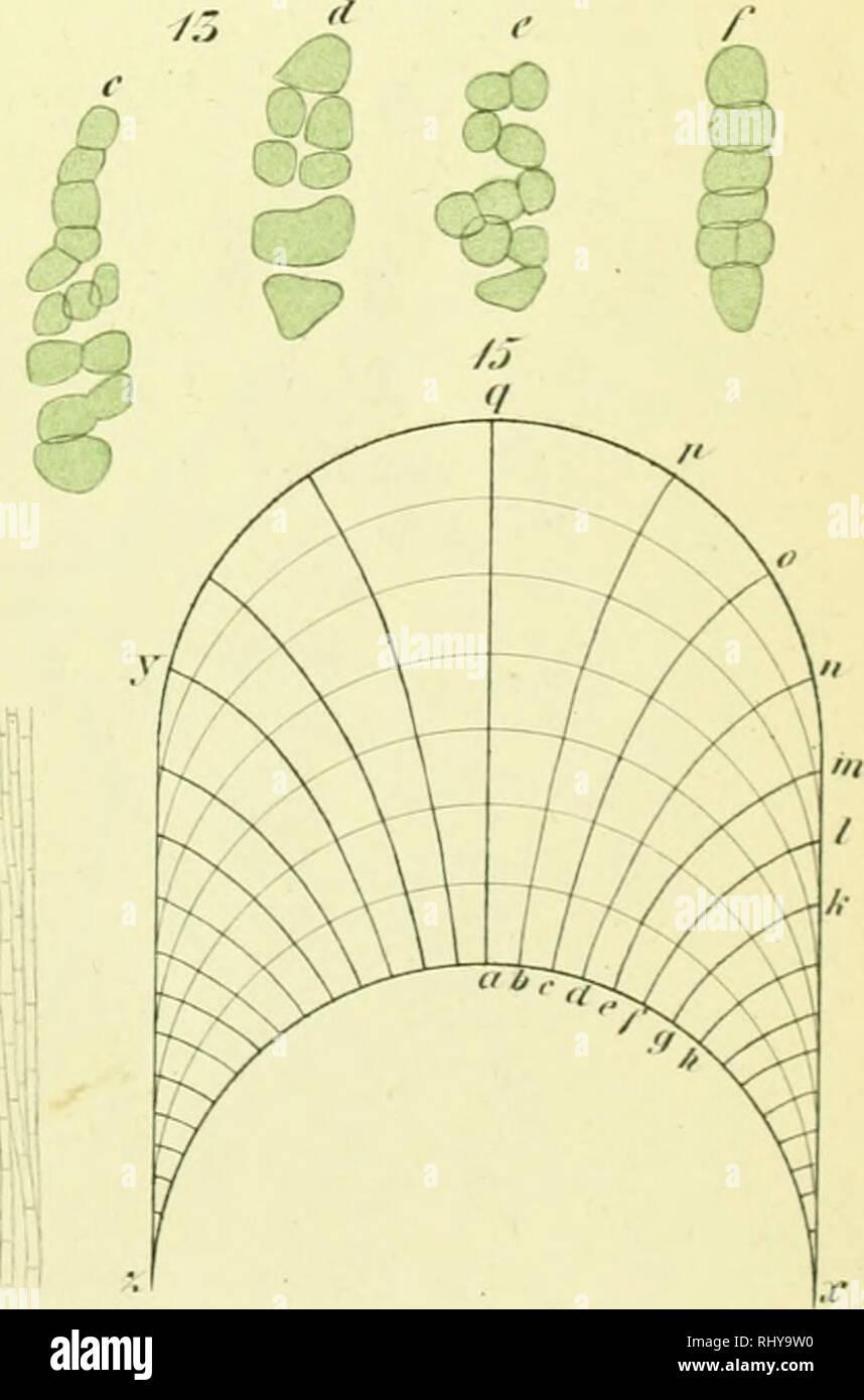 medium resolution of beitr ge zur wissenschaftlichen botanik growth plants plant physiology
