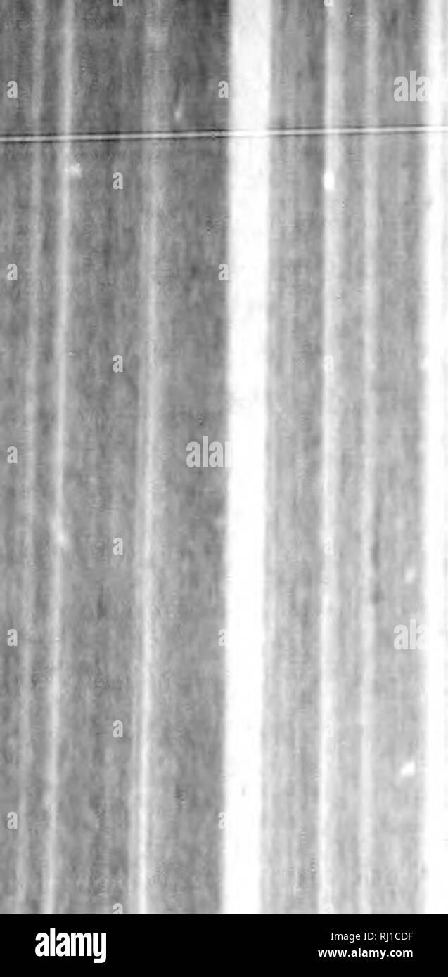 Niu Uii : Black, White, Stock, Photos, Images, Alamy